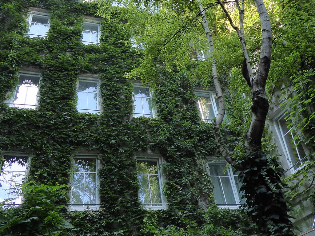 Gebäudebegrünungen - SFG | ASVE